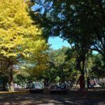 小金井公園~秋の紅葉バーベキュー